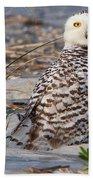 Snowy Owl In Florida 24 Beach Towel