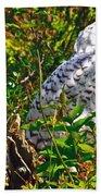 Snowy Owl In Salmonier Nature Park-nl Beach Towel