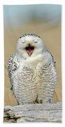 Snowy Owl Yawning Beach Towel