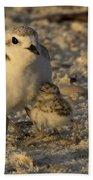 Snowy Plover Transforms Into A Spiderbird 5 Beach Towel
