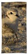 Snowy Plover Transforms Into A Spiderbird 6 Beach Towel
