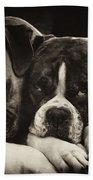Snuggle Bug Boxer Dogs Beach Towel
