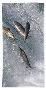 Sockeye Salmon Oncorhynchus Nerka Beach Sheet