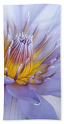 Soft Mauve Waterlily Beach Towel