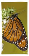 Soldier Butterfly Danaus Eresimus Beach Towel
