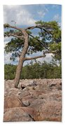 Solitary Tree Amidst Field Of Boulders Beach Towel