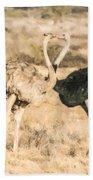 Somali Ostriches Kissing Beach Towel