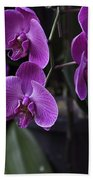 Some Very Beautiful Purple Colored Orchid Flowers Inside The Jurong Bird Park Beach Towel
