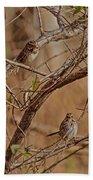 Song Sparrows Beach Towel