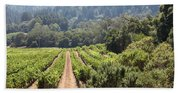 Sonoma Vineyards In The Sonoma California Wine Country 5d24518 Beach Towel