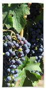 Sonoma Vineyards In The Sonoma California Wine Country 5d24630 Square Beach Towel