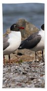 Mr. And Mrs. Laughing Gull  Beach Towel