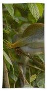 South American Squirrel Monkey Amazonia Beach Towel