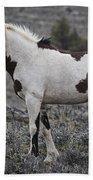 South Steens Wild Stallion Beach Towel