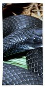 Southern Black Racer Coluber Priapus Beach Towel