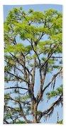 Southern Cypress Beach Towel