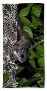 Southern Flying Squirrel Beach Towel