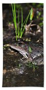 Southern Leopard Frog Beach Towel