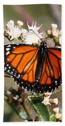 Southern Monarch Butterfly Beach Towel
