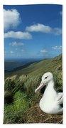 Southern Royal Albatross Beach Towel