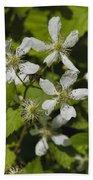 Southern Sawtooth Highbush Blackberry Blossoms - Rubus Argutus Beach Towel