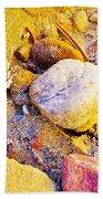 Spadefoot Toad Near Stones On Capitol Gorge Pioneer Trail In Capitol Reef National Park-utah Beach Towel