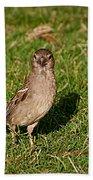 Sparrow 1 Beach Towel