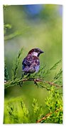 Sparrow Beach Towel