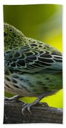 Speckled Tanager - Tangara Guttata Beach Sheet