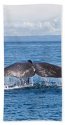 Sperm Whale Tail  Physeter Catodon Beach Towel