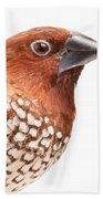 Spice Finch Lonchura Punctulata Portrait Beach Towel