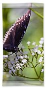 Spicebrush Swallowtail Butterfly Beach Towel