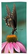 Spicebush Swallowtail Butterfly - Papilio Troilus Beach Towel