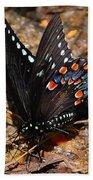 Spicebush Swallowtail Butterfly Preflight Beach Towel