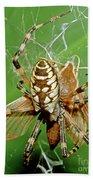 Spider Eating Moth Beach Towel