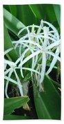 Spider Flower In Sint Maarten Beach Towel