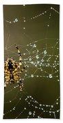 Spider In Web 5 Beach Towel