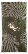 Spider Light Beach Towel