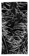 Spikes Of Nature Beach Towel