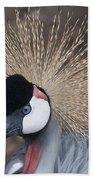 Spikey Feathers-closeup Beach Towel