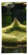 Spiky Lily Pad Beach Towel
