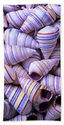 Spiral Sea Shells Beach Towel