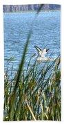 Splashing In The Lake Beach Towel