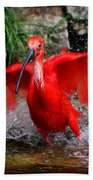 Splish Splash - Red Ibis Beach Towel
