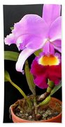 Spotlight On Purple Potted Cattleya Orchid Beach Towel