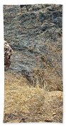 Spotted Hyena Pups In Kruger National Park-south Africa Beach Towel