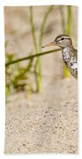 Spotted Sandpiper Pictures 45 Beach Towel