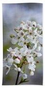 Spring Blooming Bradford Pear Blossoms Beach Towel