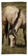 Spring Creek Basin Wild Horse Grazing Beach Towel