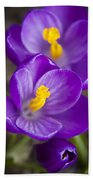 Spring Crocus Beach Towel
